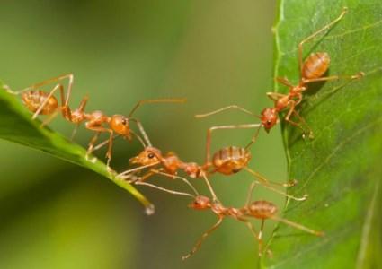 Arti Mimpi Semut Versi Primbon Jawa dan Pandangan Ahli Tafsir